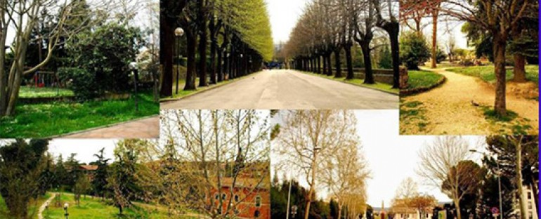 Green Infrastructures and Urban forests for improving the environment and the quality of life